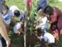 Escola municipal em Pernambués ganha pomar urbano nesta quarta (18)