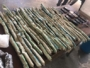 Explosivos que seriam usados em roubos a bancos são apreendidos